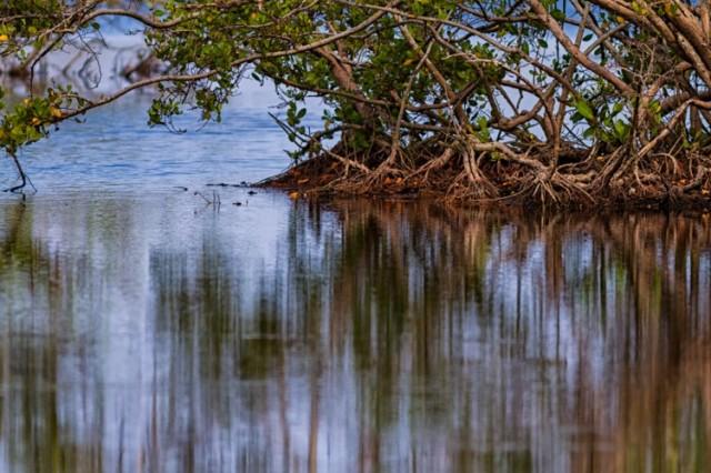 Caño-Tiburones_manglar-POR-JAVIER-HERNANDEZ-750x500